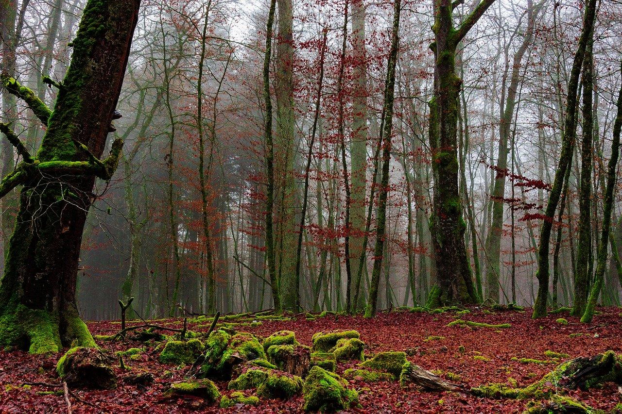 היער השחור: כל המידע שצריך לפני שאורזים!